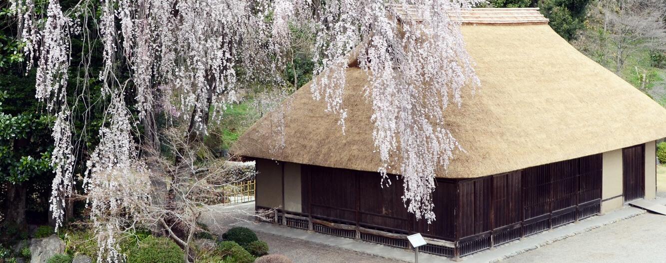 高麗家住宅と枝垂れ桜(4月)TOP